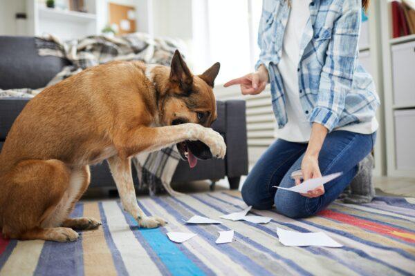 Vpliv pasje hrane na vedenje psa